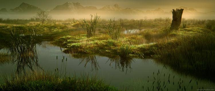 Marshes , Forest Pack