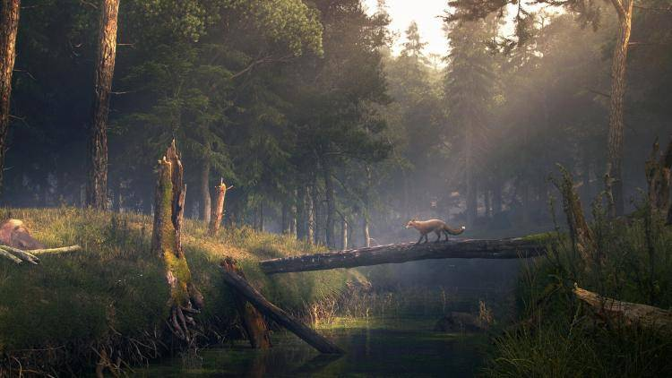 Fox , Forest Pack