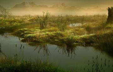 Itoosoft  Forest Pack  5c1a13b53aaf7/forestpack_marshes.jpg