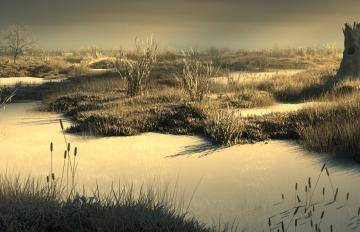 Forest Pack  5c1a13b53aaf7/forestpack_marshes_clay.jpg