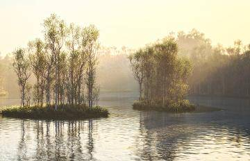 Itoosoft  Forest Pack  5c1a1415463cd/62_river3dmk.jpg