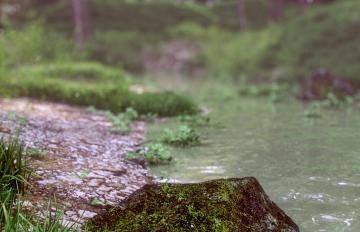 Itoosoft  Forest Pack  Railclone 5c1a1503e9748/414_cam_3_closeup_large.jpg