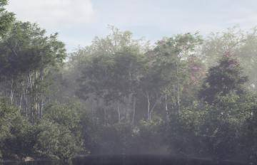 Forest Pack  5c1a150cb5d7b/417_speculum_04_media_01.jpg