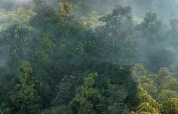 Itoosoft  Forest Pack  5c1a1533d39a7/stills_lightinga_f0012.jpg