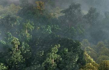 Itoosoft  Forest Pack  5c1a1533d39a7/stills_lightingc_f0031.jpg