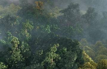Forest Pack  5c1a1533d39a7/stills_lightingc_f0031.jpg
