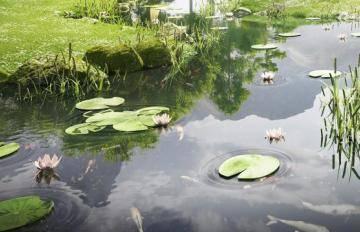 Itoosoft  Forest Pack  5c1a159e1813a/443_meditation_garden_detail033.jpg