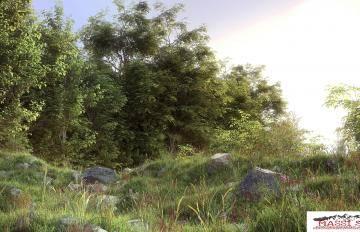 Itoosoft  Forest Pack  5c1a1628eb2af/58cfc384c120d.jpg