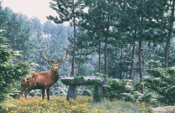 Itoosoft  Forest Pack  5c1a1628eb2af/58d0f33bc1601.jpg