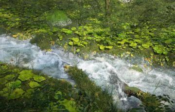 Itoosoft  Forest Pack  5c1a164046ff4/591ac64dd1d69.jpg