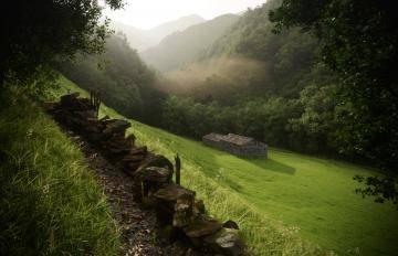 Itoosoft  Forest Pack  Railclone 5c1a1784f3778/5a4f4e905c50c.jpg