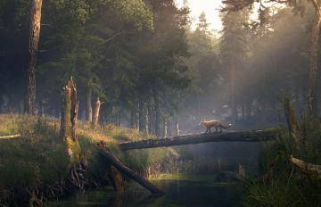 Visual Effects, Forest Pack