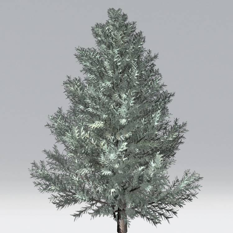 fpp-lib-2d-trees-blue_spruce.jpg