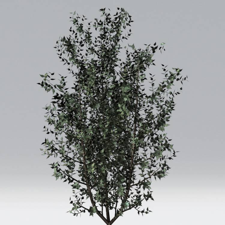 fpp-lib-2d-trees-gray_birch.jpg