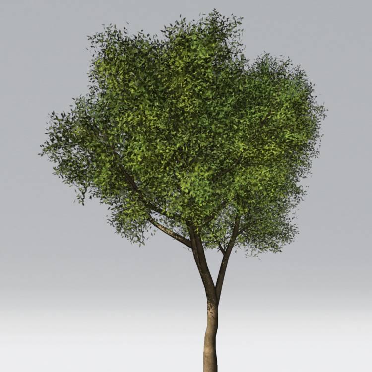 fpp-lib-2d-trees-maple.jpg