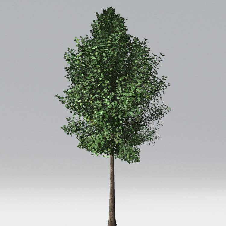 fpp-lib-2d-trees-quaking_aspen.jpg