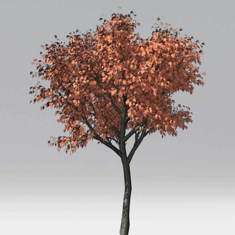fpp-lib-2d-trees-red_oak.jpg