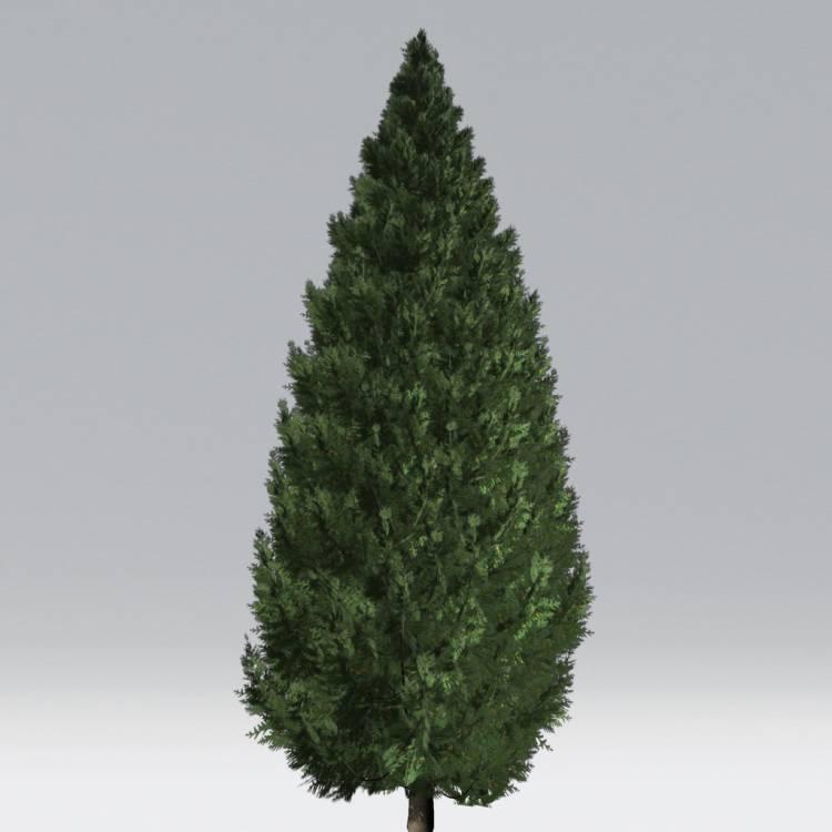 fpp-lib-2d-trees-western_redcedar.jpg