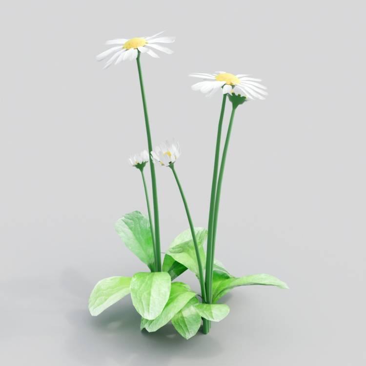 fpp-lib-3d-flowers_and_grass-daisy_01.jpg