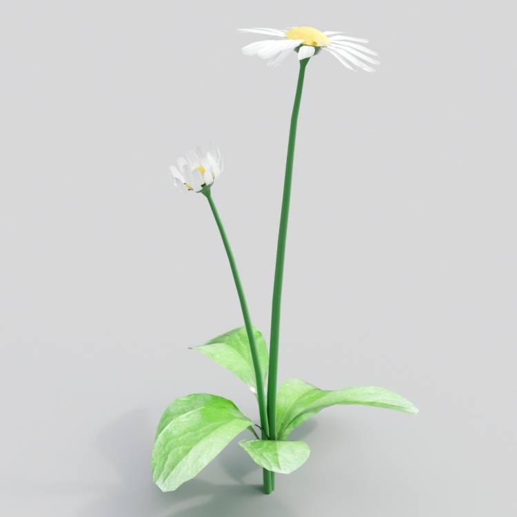 fpp-lib-3d-flowers_and_grass-daisy_02.jpg