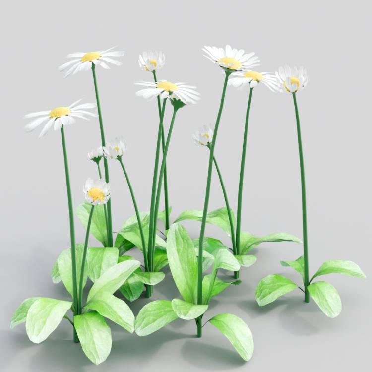 fpp-lib-3d-flowers_and_grass-daisy_05.jpg