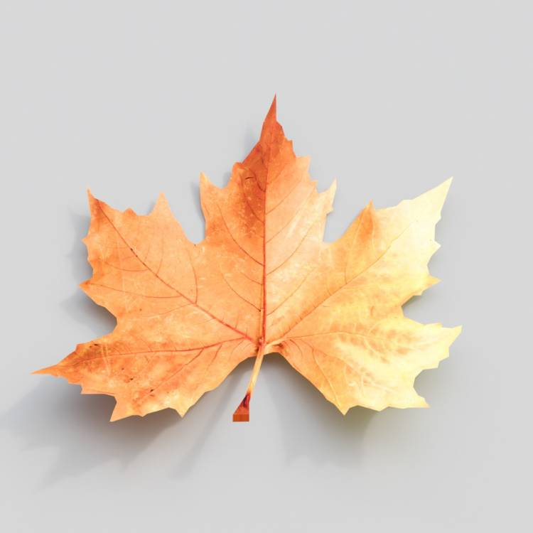 fpp-lib-3d-flowers_and_grass-dry_leaf_maple_01.jpg
