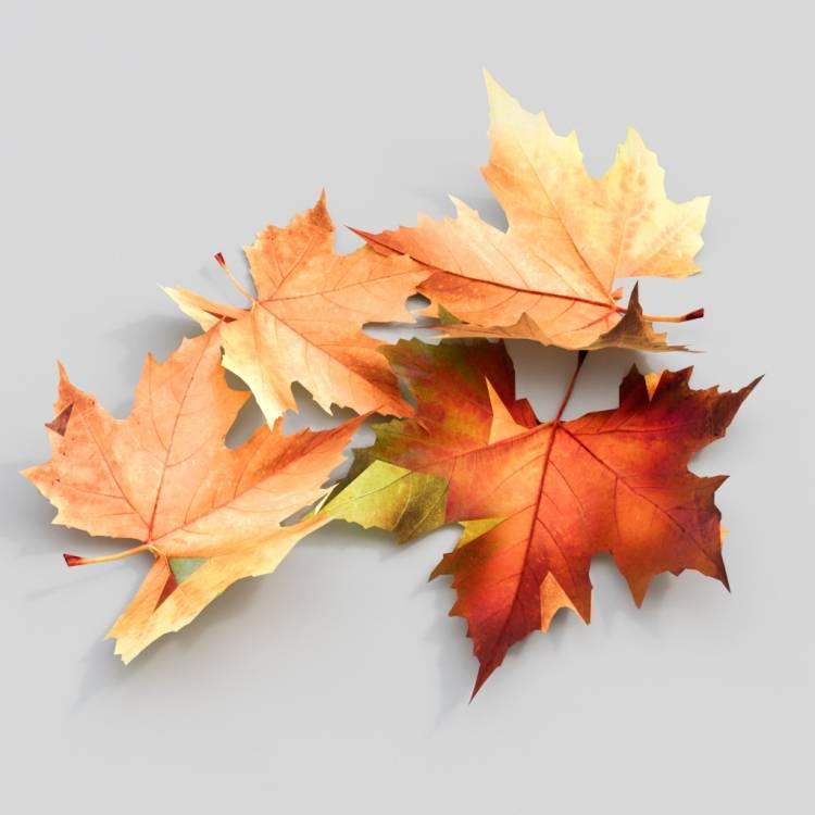 fpp-lib-3d-flowers_and_grass-dry_leaf_maple_02.jpg