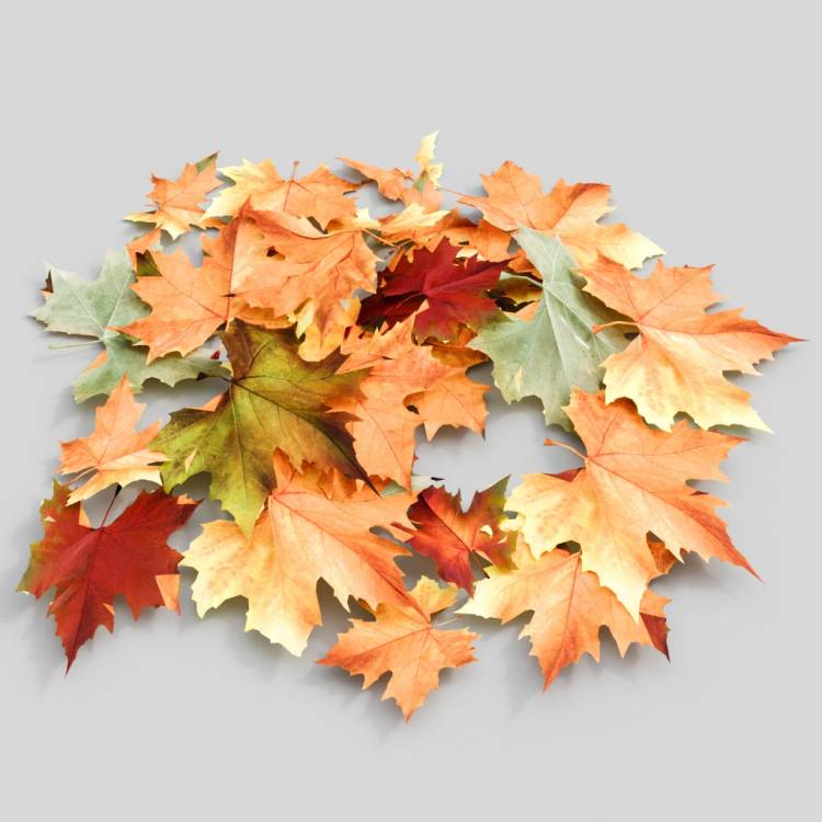 fpp-lib-3d-flowers_and_grass-dry_leaf_maple_03.jpg