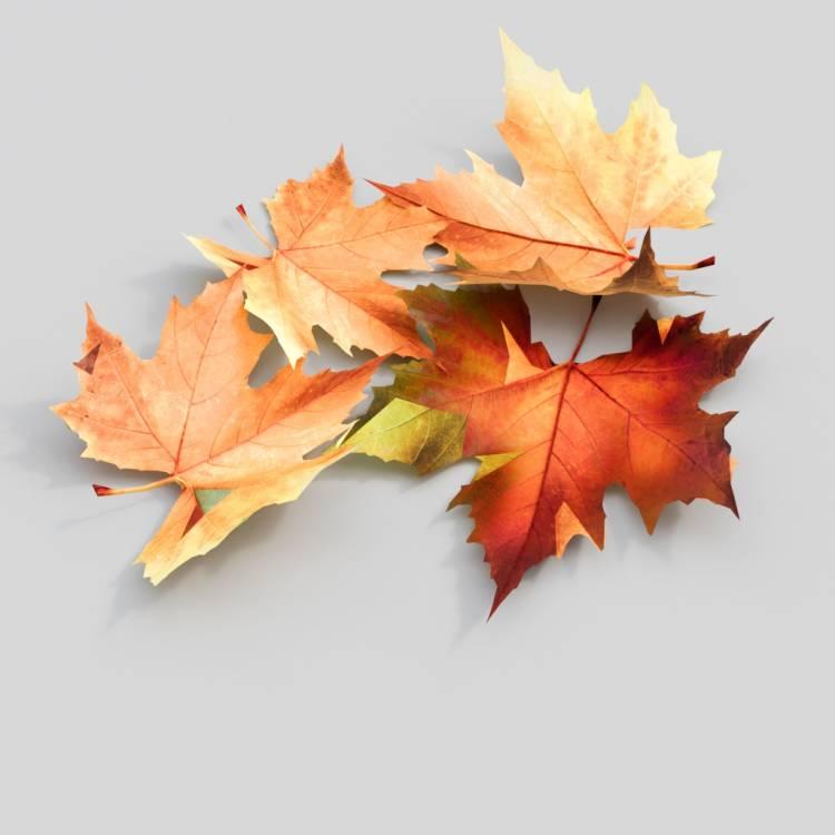 fpp-lib-3d-flowers_and_grass-oak_leaf_02.jpg