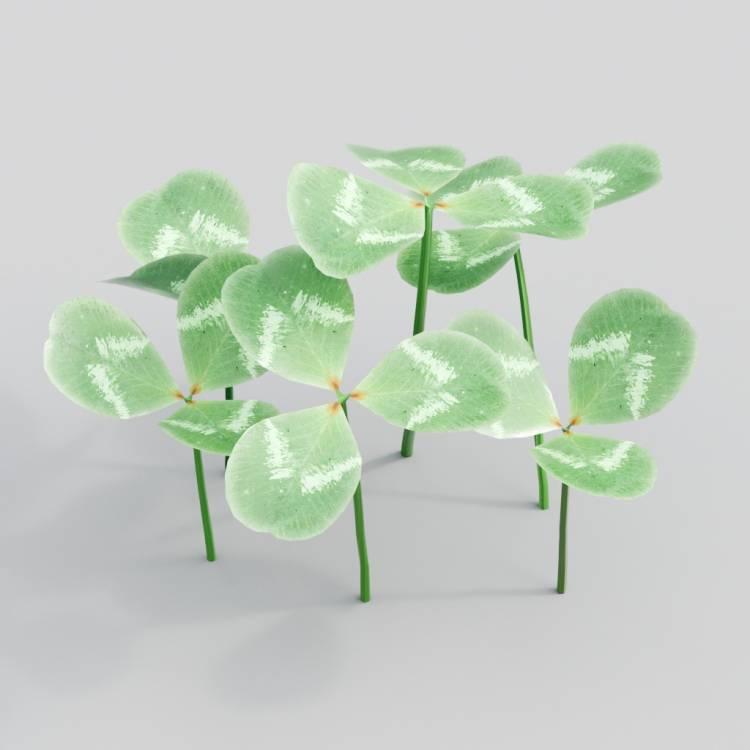 fpp-lib-3d-flowers_and_grass-white_clover_01.jpg