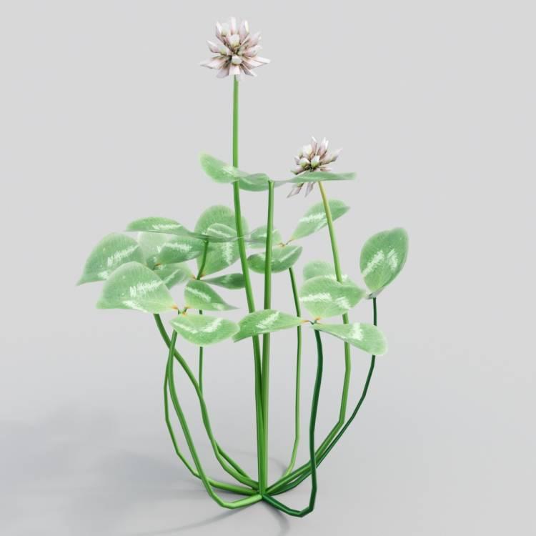 fpp-lib-3d-flowers_and_grass-white_clover_02.jpg