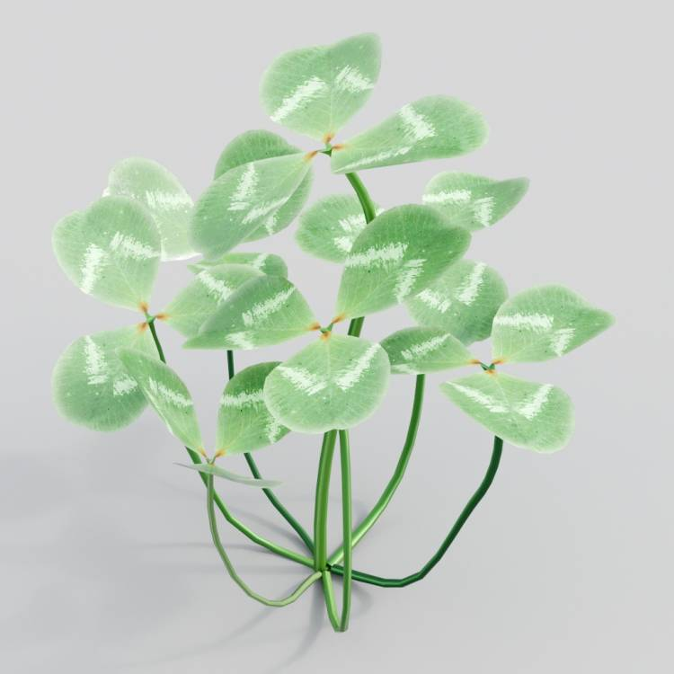 fpp-lib-3d-flowers_and_grass-white_clover_03.jpg