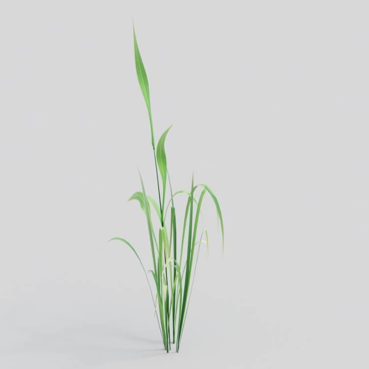 fpp-lib-3d-flowers_and_grass-wild_grass_02.jpg