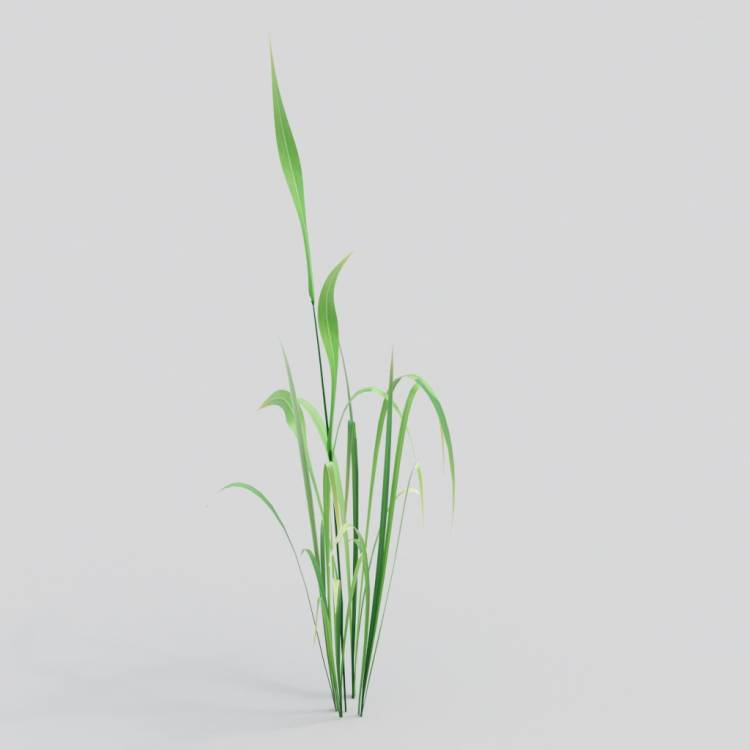 fpp-lib-3d-flowers_and_grass-wild_grass_02.jpg