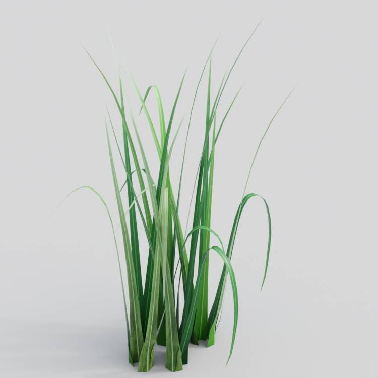 fpp-lib-3d-flowers_and_grass-wild_grass_03.jpg