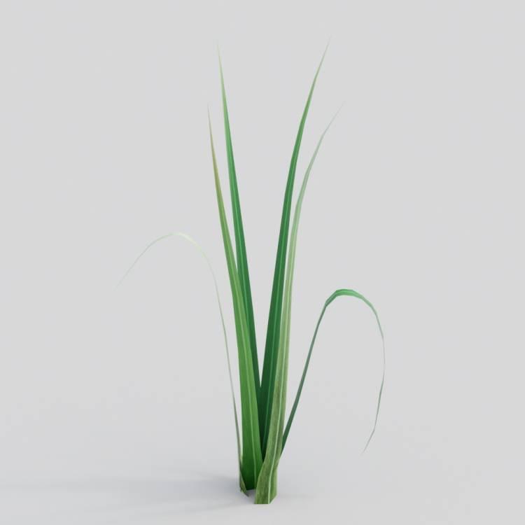 fpp-lib-3d-flowers_and_grass-wild_grass_04.jpg