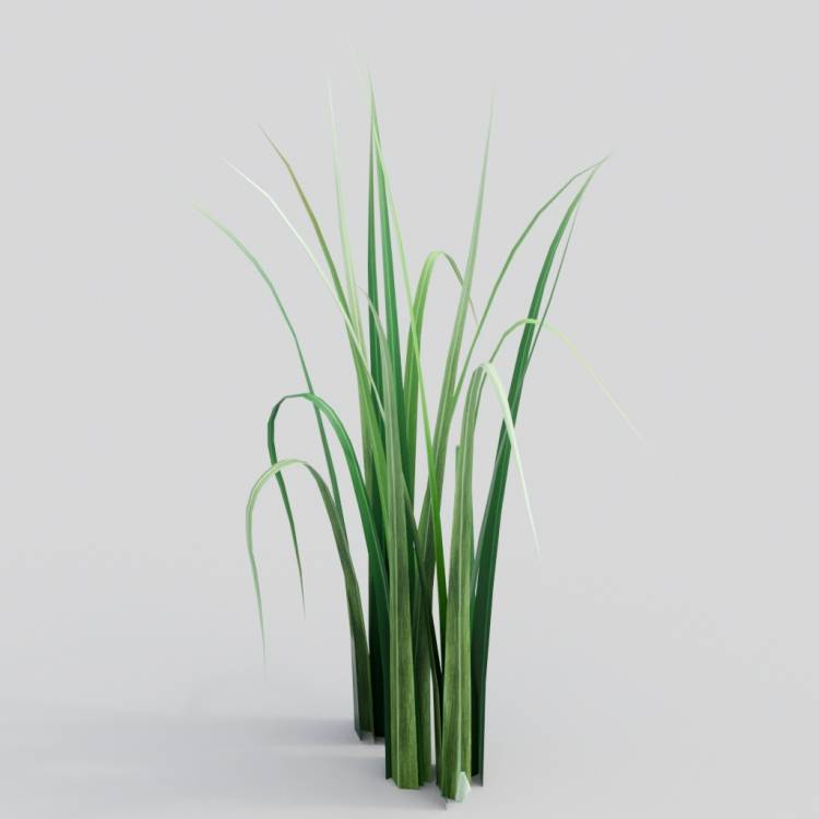 fpp-lib-3d-flowers_and_grass-wild_grass_05.jpg