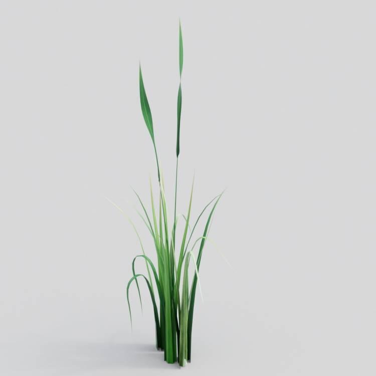 fpp-lib-3d-flowers_and_grass-wild_grass_06.jpg