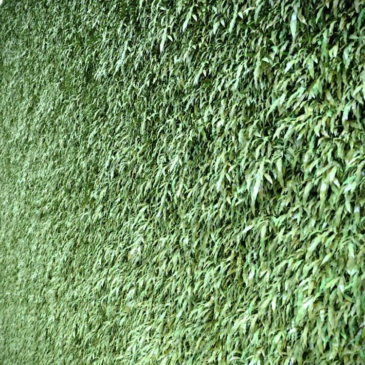 fpp-lib-presets-green-walls-cretan_brake_uv.jpg