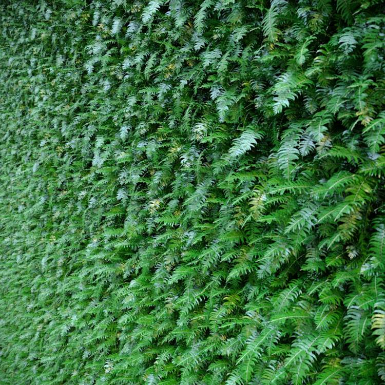 fpp-lib-presets-green-walls-ferns_1_uv.jpg