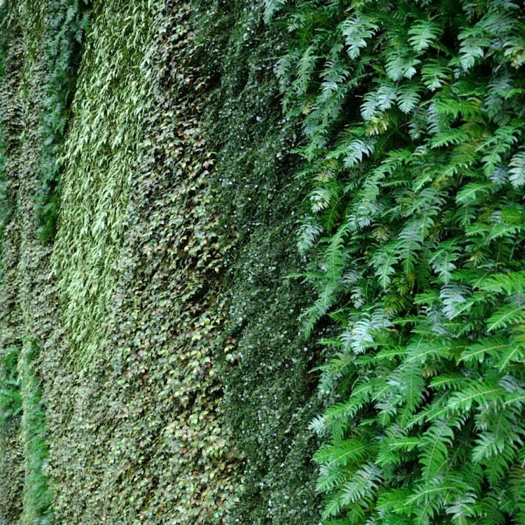 fpp-lib-presets-green-walls-green_wall_uv_diversity_map.jpg