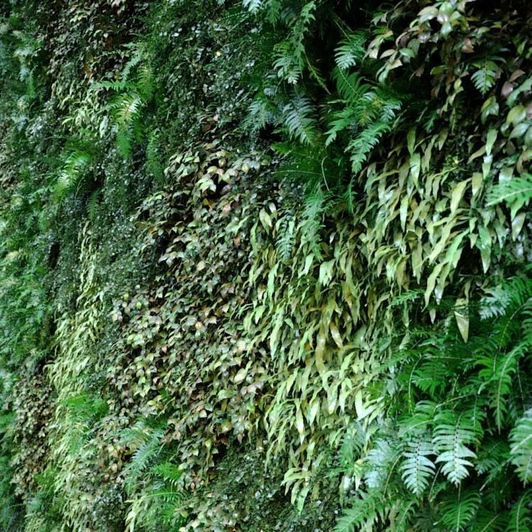 fpp-lib-presets-green-walls-green_wall_xy_clusters.jpg