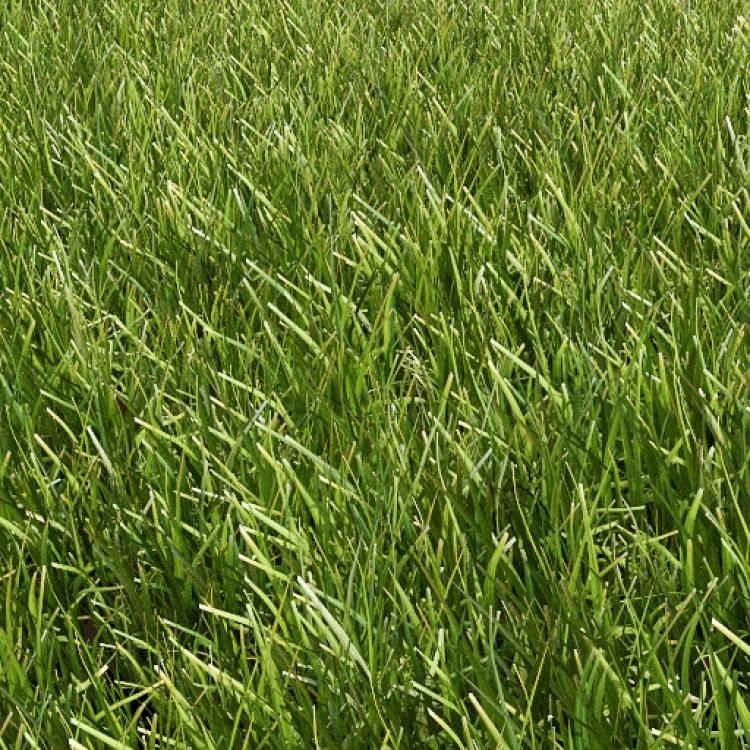 fpp-lib-presets-lawns-common_grass_01_detail.jpg