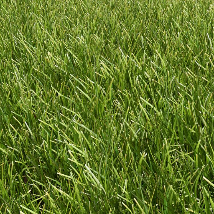 fpp-lib-presets-lawns-common_grass_01_detail.jpg