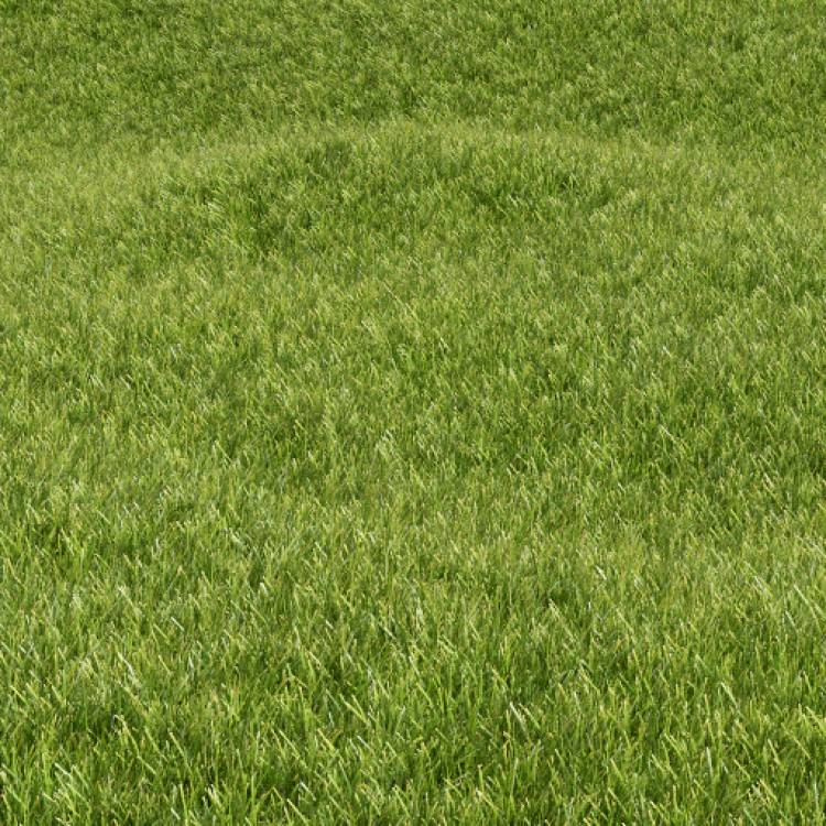 fpp-lib-presets-lawns-common_grass_01_large.jpg