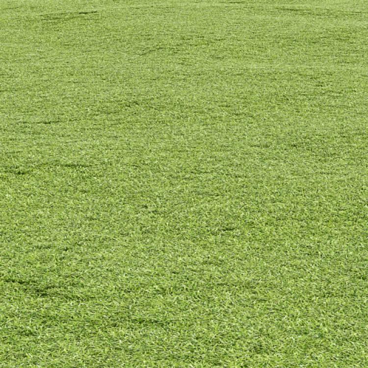 fpp-lib-presets-lawns-cut_grass_field_01_large.jpg