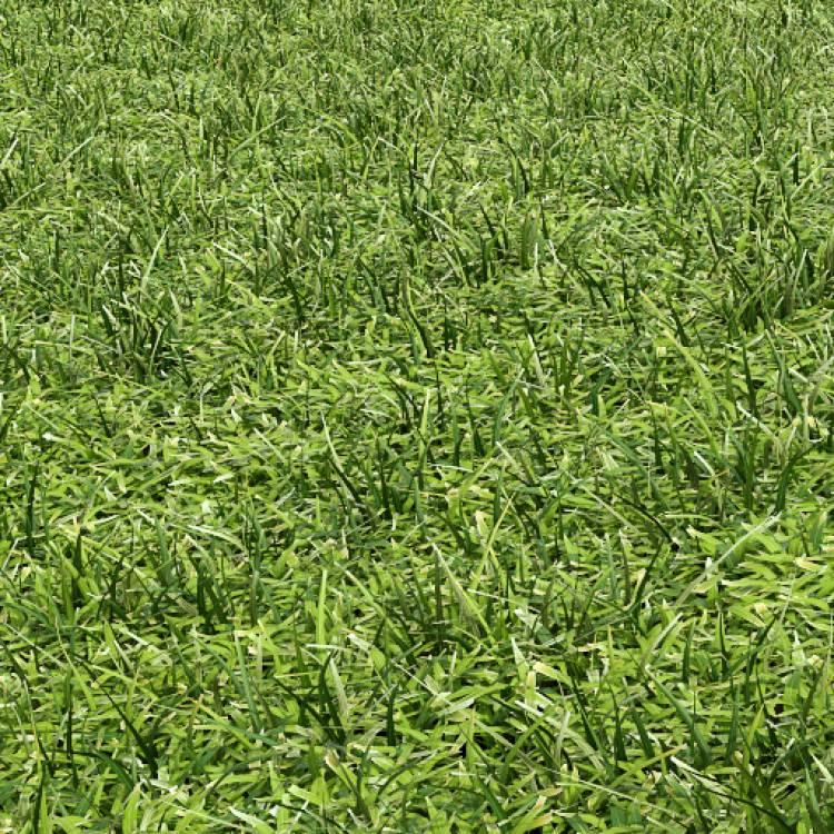 fpp-lib-presets-lawns-cut_grass_field_02_detail.jpg