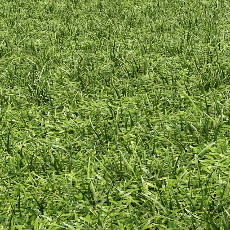 fpp-lib-presets-lawns-cut_grass_field_02_detail.jpg