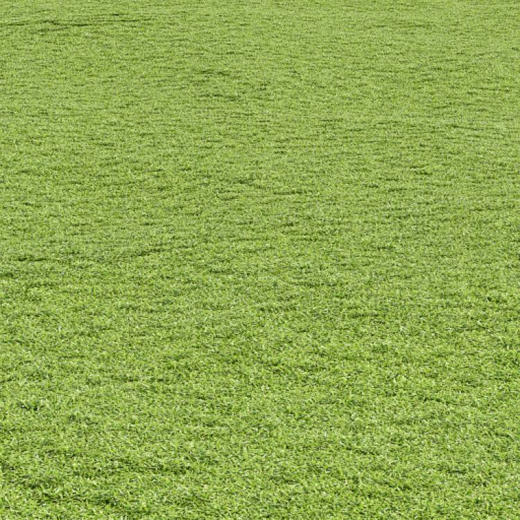 fpp-lib-presets-lawns-cut_grass_field_03_large.jpg