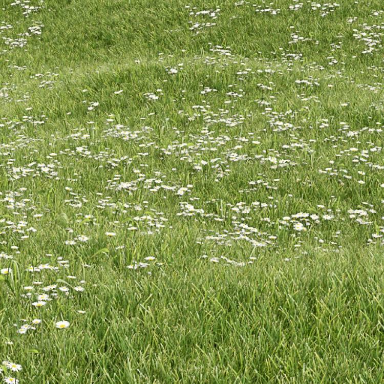 fpp-lib-presets-lawns-daisy_01_large.jpg